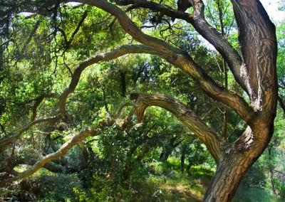 15 Wildwood Park