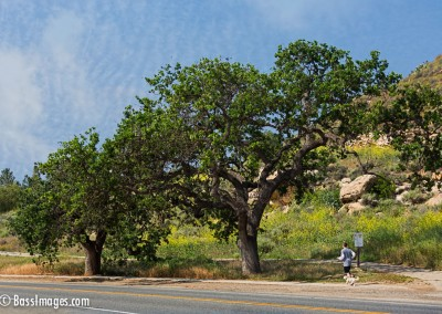 Thousand-Oaks-Trees-jogger-1