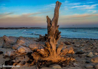Driftwood Ventura-1