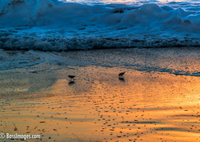 Sandpipers at sunset-1