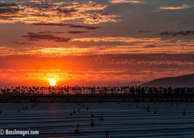 Sunset with row of palms-2