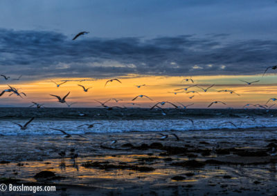 Gulls flushed sunset-1