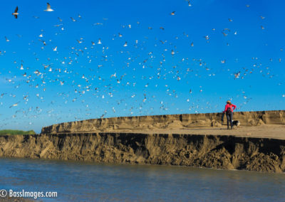 Santa Clara river estuary spill-2
