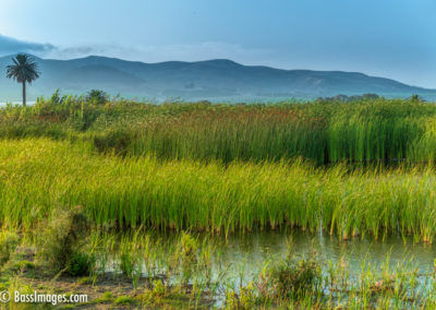 Tall Grass at River Mouth-1
