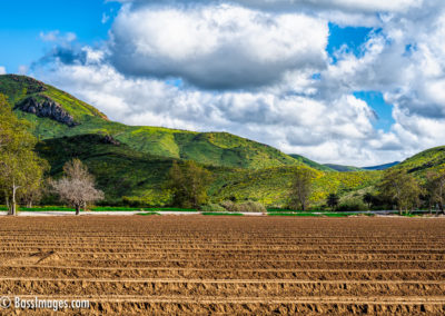 CSUCI farm field-1